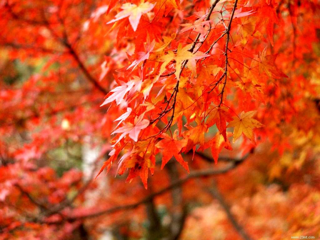 南极洲  香山红叶