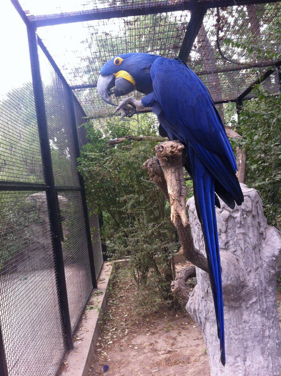 北京动物园一日游