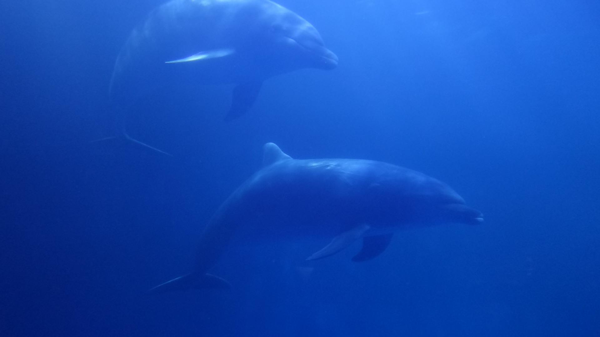 壁纸 海底 海底世界 海洋馆 水族馆 桌面 1920_1080