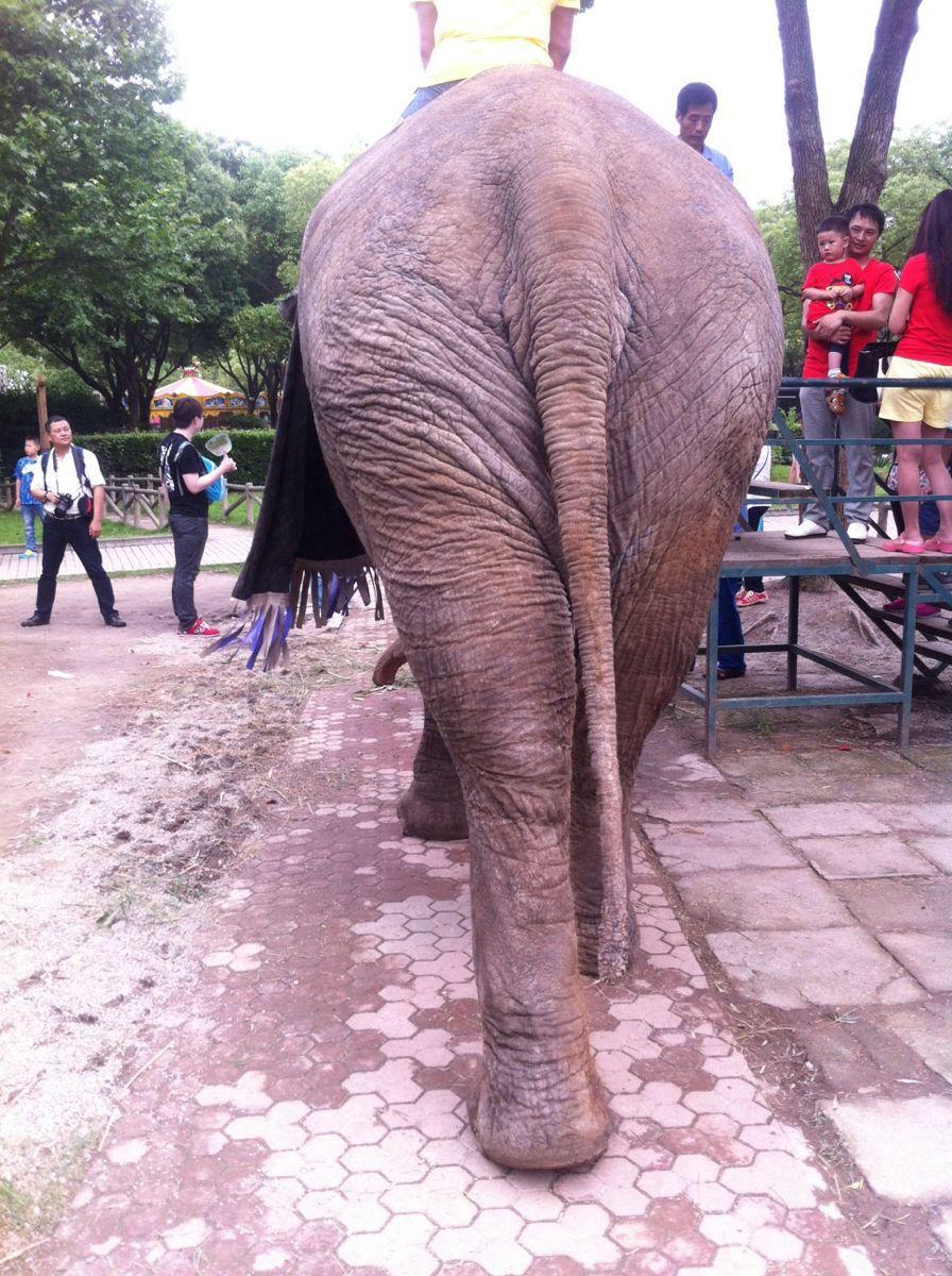 """上海野生动物园汇集了世界各地的动物。你可以乘坐游览车观察东北虎、非洲狮、黑熊等猛兽的生活,还可以观看大象、长颈鹿、火烈鸟等动物表演;这里还有备受小朋友们欢迎的""""小动物乐园"""",体验亲手投食给羊驼的乐趣。 动物园分为放养区和圈养区,放养区除了野兽,还有悠闲觅食的野骆驼、野牦牛、羚羊等食草动物。步行区中则可以看到大熊猫、大象、长颈鹿、火烈鸟、企鹅等各种动物;动物园内精彩的动物表演也相当受追捧,首先上午9至10点间会有大象、骆驼、斑马等动物明星在门口迎接你的到来;接着可欣赏海狮馆内海狮杂耍"""