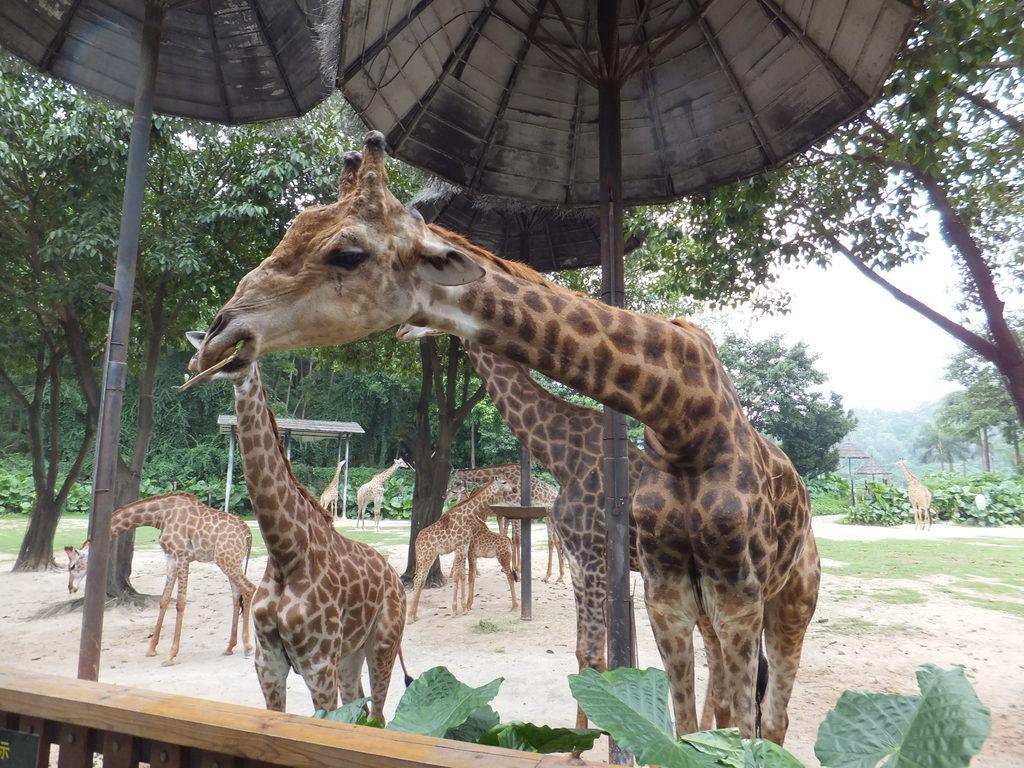 带着6岁的女儿番禺游香江野生动物园