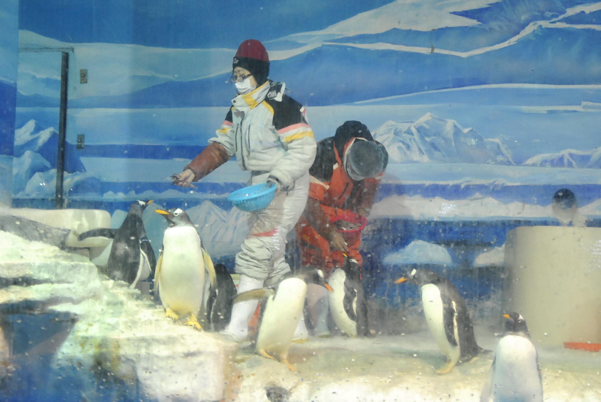 哈尔滨极地馆,不一样的动物世界