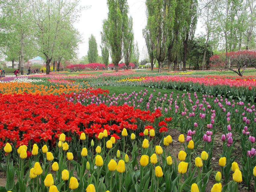 四月踏青好心情(3)—植物园里的春天 - 北京游记攻略