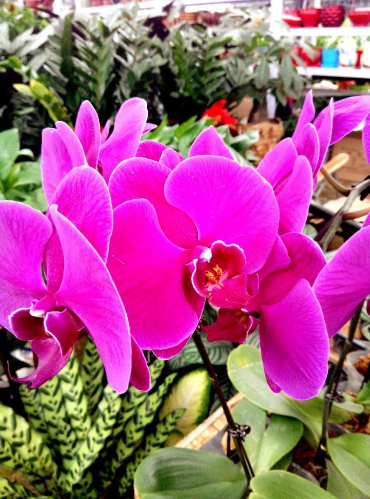 石家莊植物園花卉市場