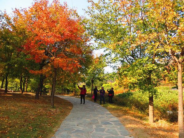 北京植物园秋色