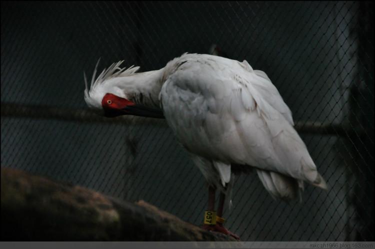 朱鹮自然保护区,洋县朱鹮自然保护区攻略/地址/图片