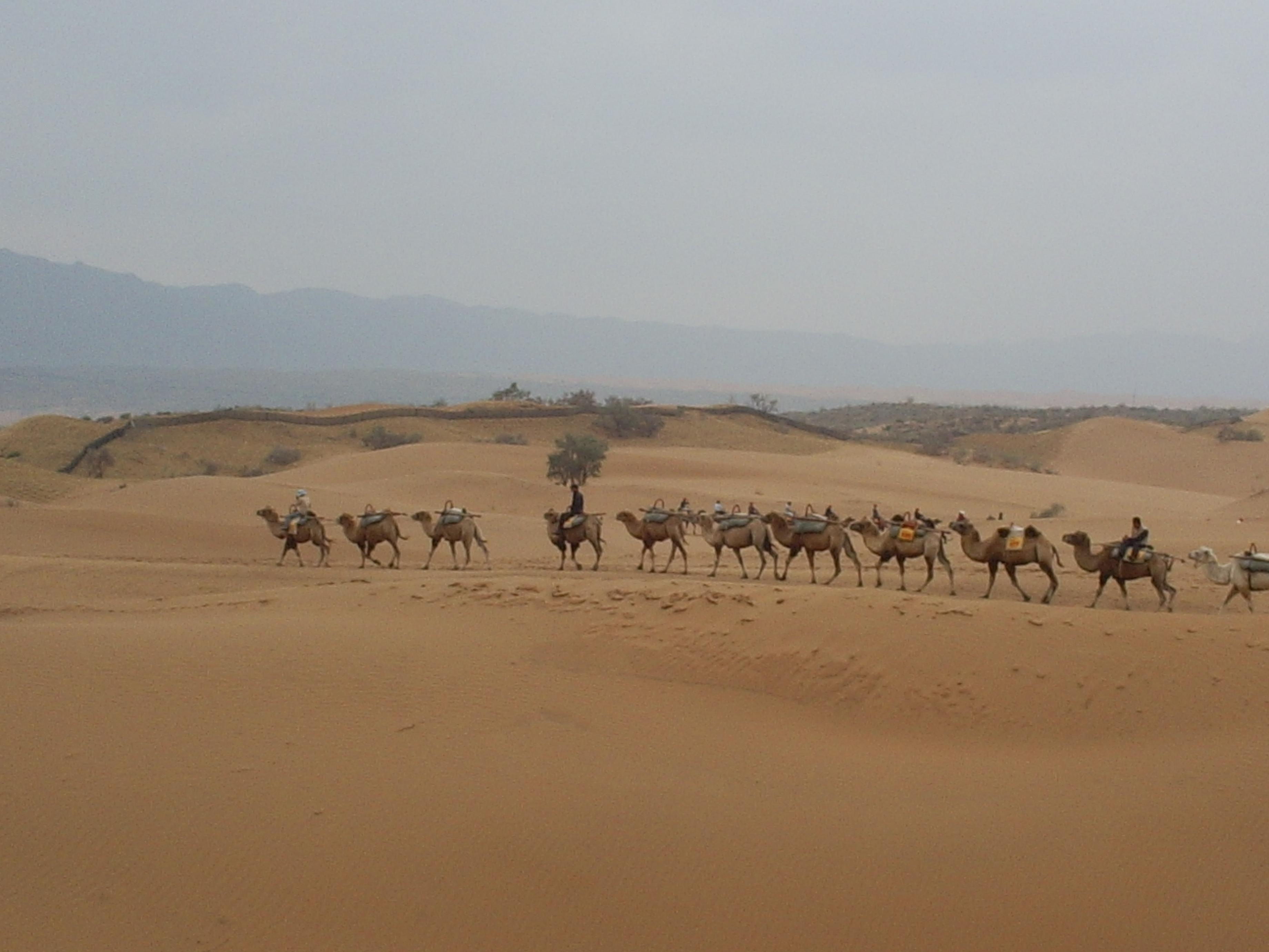 沙坡头,位于中卫市区以西约20公里处,从市区前往大约需要1小时左右。 沙坡头是国家首批5A级旅游景区,黄河第一入川口,是欧亚大通道,古丝绸之路的必经之地。沙坡头景区南靠山峦叠嶂、巍峨雄奇的祁连山余脉香山,北连沙峰林立、绵延万里的腾格里大沙漠,中间被奔腾而下,一泻千里的黄河横穿而过。这种一边是浩瀚无垠的腾格里大沙漠,一边是长流不息的黄河水的景色非常壮丽,自古以来就有许多文人墨客在此留下诗词文章。唐代诗人王维的千古名句大漠孤烟直,长河落日圆,描写的就是此处。 在这里,你可以去国内最大的天然滑沙场,从百米沙坡
