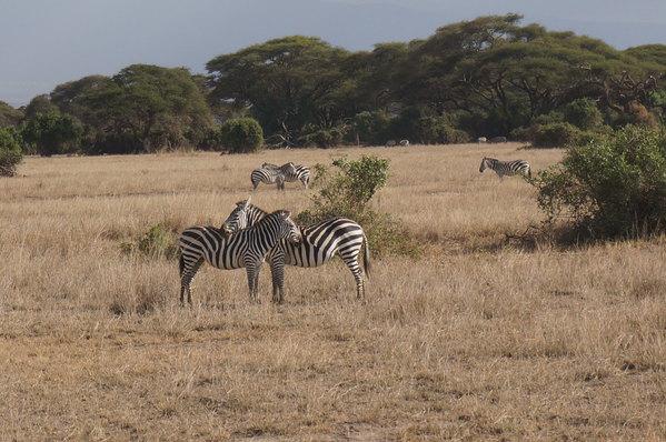 狂野肯尼亚,奔向心目中的动物世界,一生值得去一回.