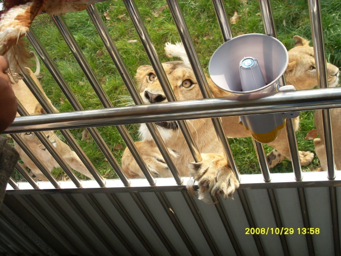 秦岭野生动物园,西安秦岭野生动物园攻略/地址/图片