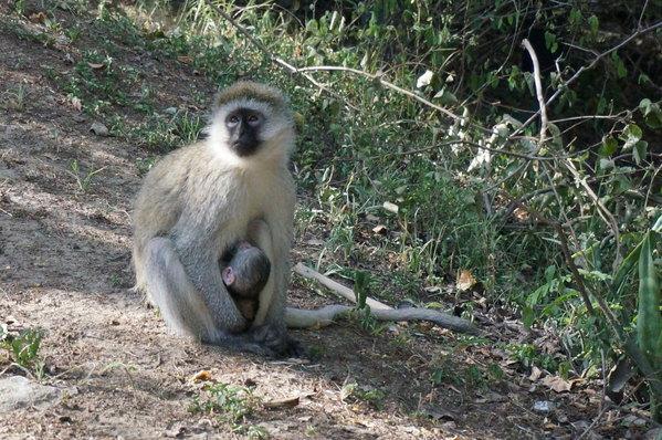 野肯尼亚,奔向心目中的动物世界 四 D9 D10