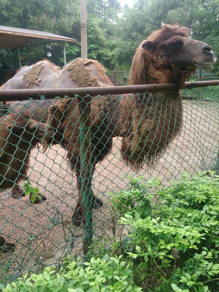 【携程攻略】广西南宁动物园景点
