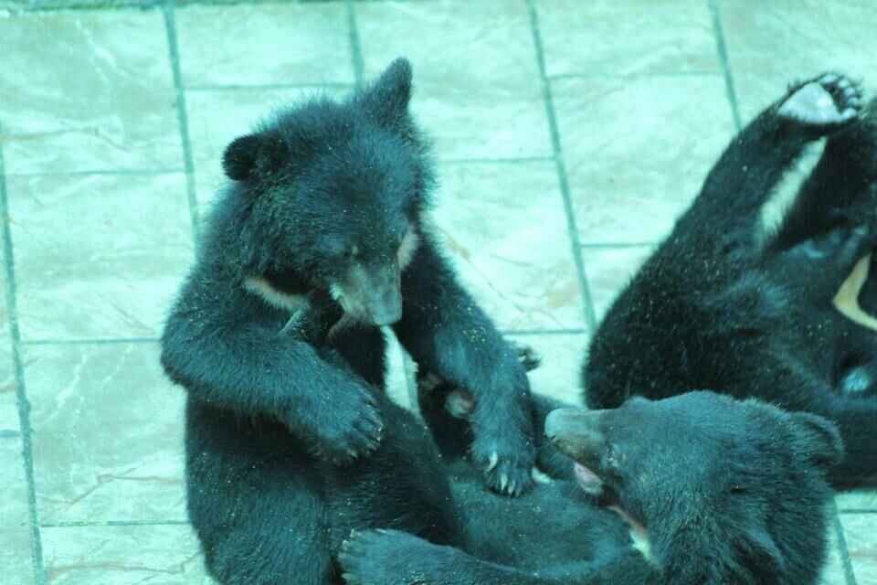 黑熊图片大全可爱