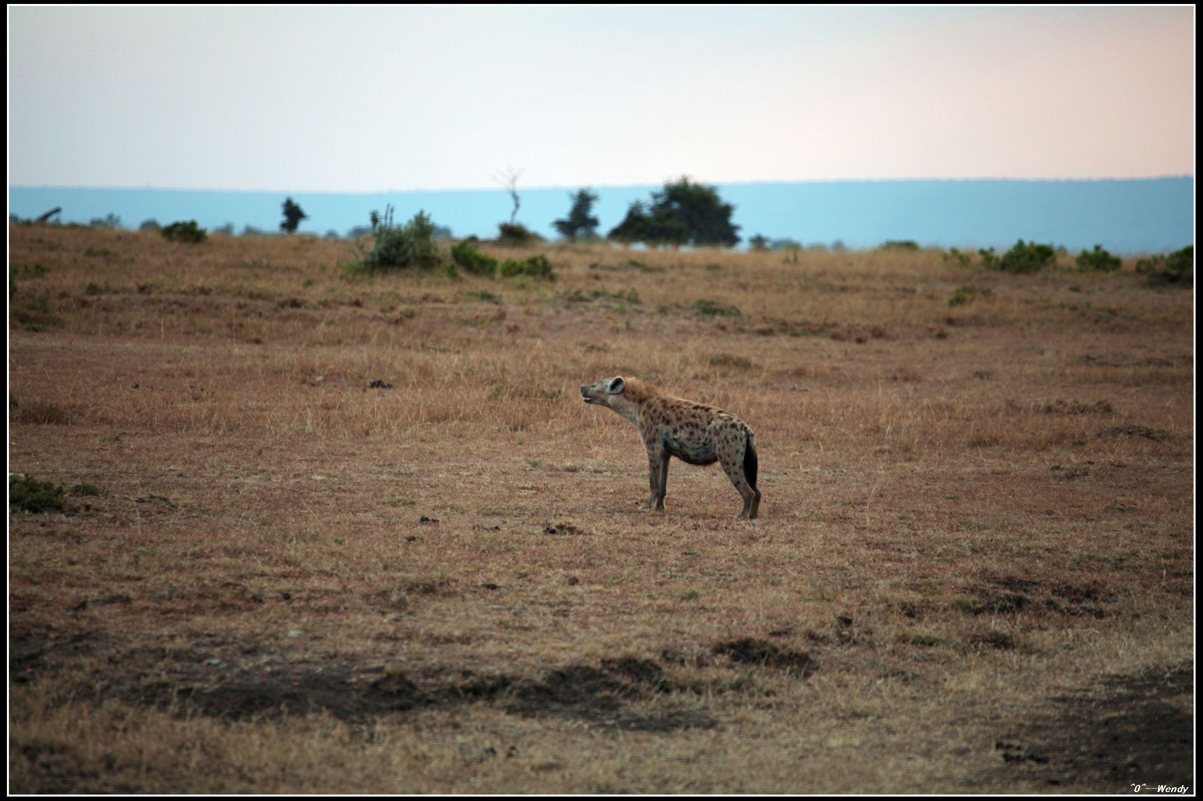 东非:超级肯尼亚,走进动物世界