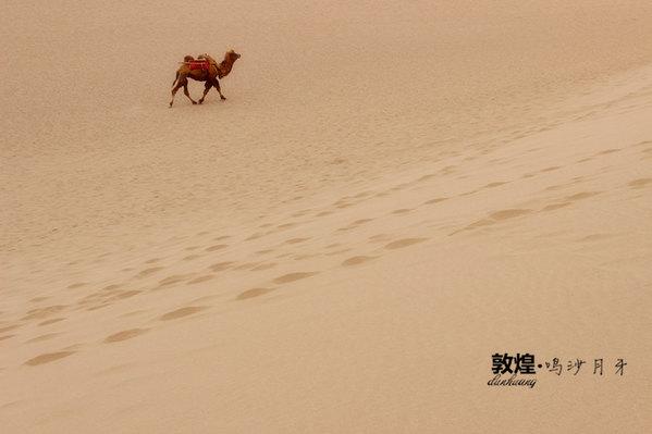 可爱的小骆驼,我跑,我再跑.