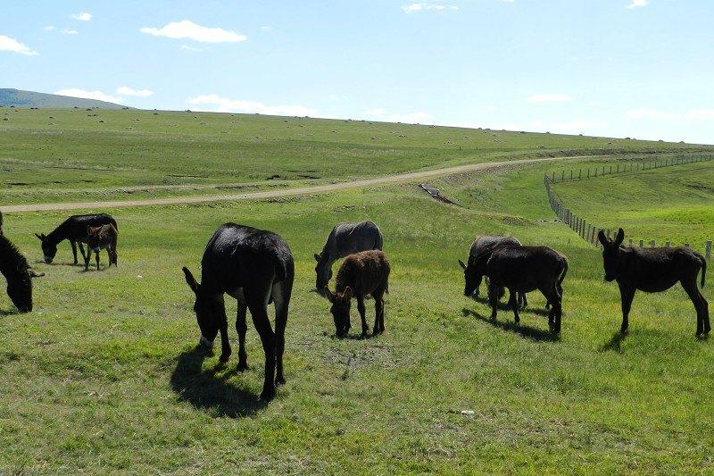 驴子的围墙 - 花開有聲 - 花開有聲