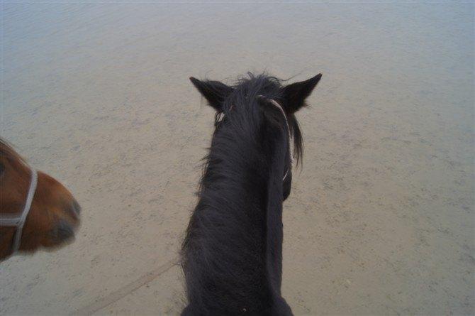 (湿地对面山坡上就是俄罗斯,有那么多的建筑,我猜怎么也至少应该是一个镇吧) 接下来注意了,草原上骑马,重点推荐。以前只敢听说,没想到今儿算是来着了,还真让我们过了把瘾。张师傅听说同伴没有在临江骑马,就建议说让我们在草原上遛上一圈,顺便等着太阳下山,可以在草原上看日落,那是相当的壮观。我们讲好价,60块钱一个小时,选好马后开始在草原上遛了。作为内地人,不要说骑马,连见到马的时候都很少,所以我们都没有真正意义上骑过马,同伴以前在丽江骑马充其量不过是坐在马背上,连马的疆绳都没有机会摸到,一路上由牵马人牵着马懒
