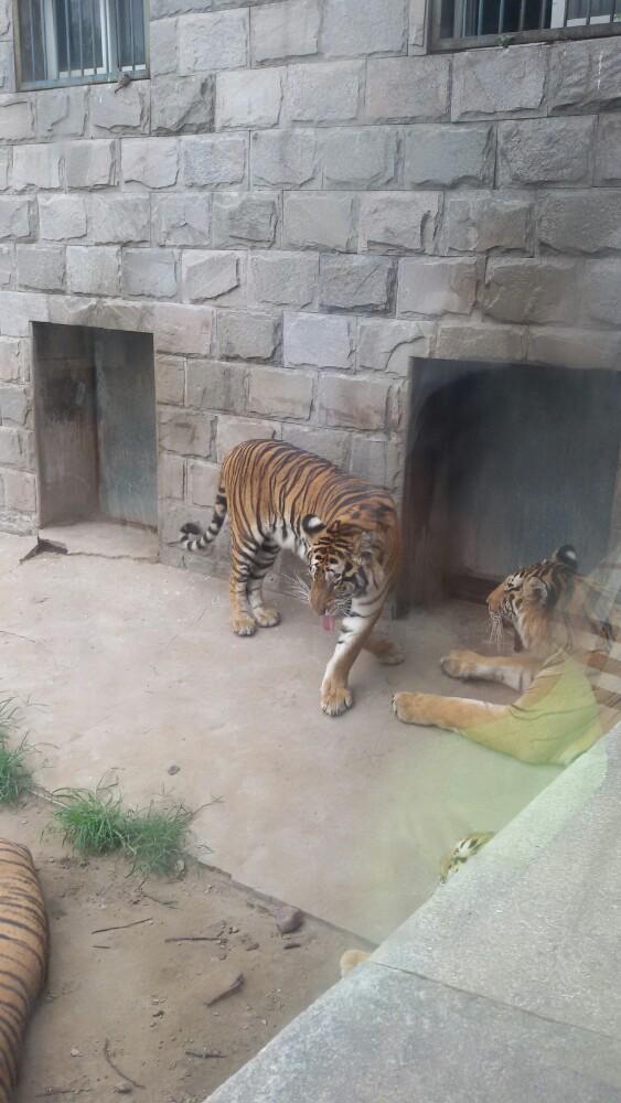 拍过北京野生动物园 【美差】+我拍过北京