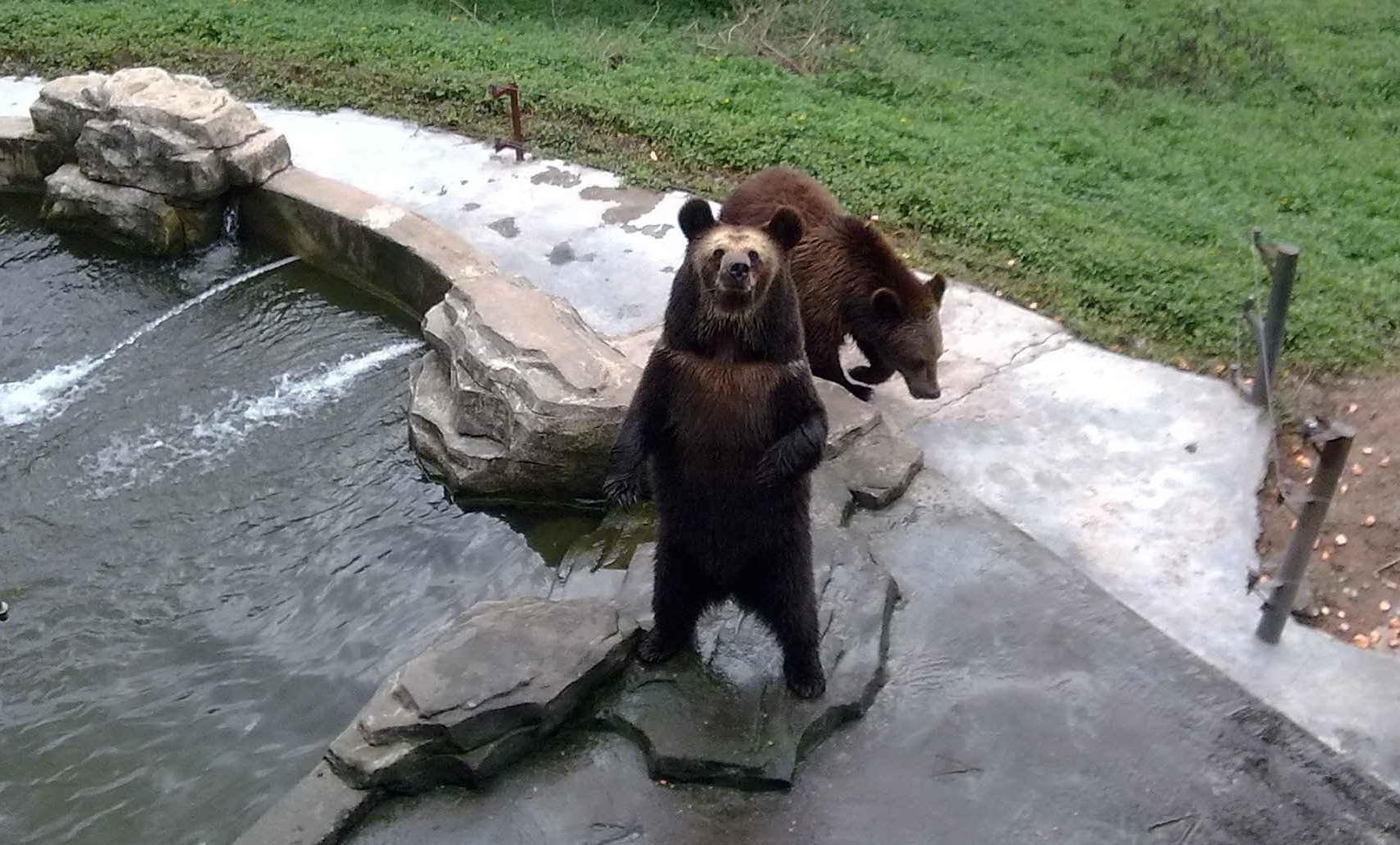 野生动物园,深圳野生动物园攻略/地址/图片/门票