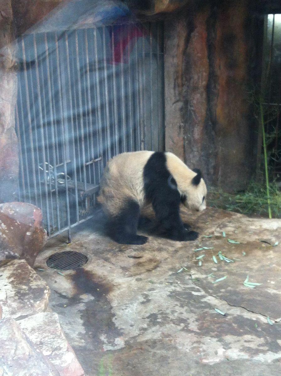 【携程攻略】北京北京动物园适合家庭亲子旅游吗