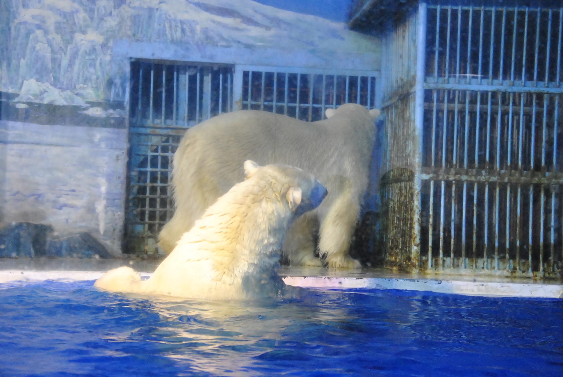 有一个小秘密,北极呼呼镇大象霍顿图片