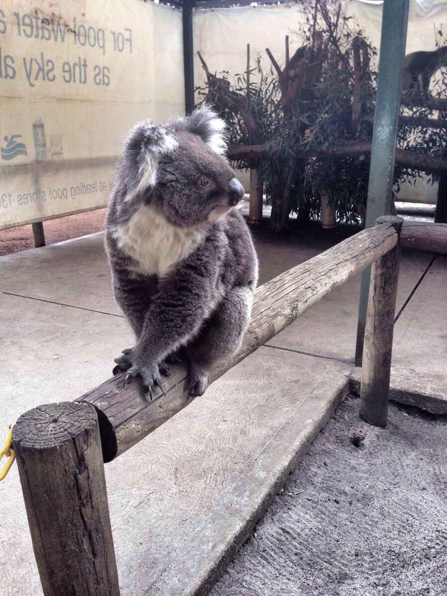 肥肥安游遍全世界—可爱动物