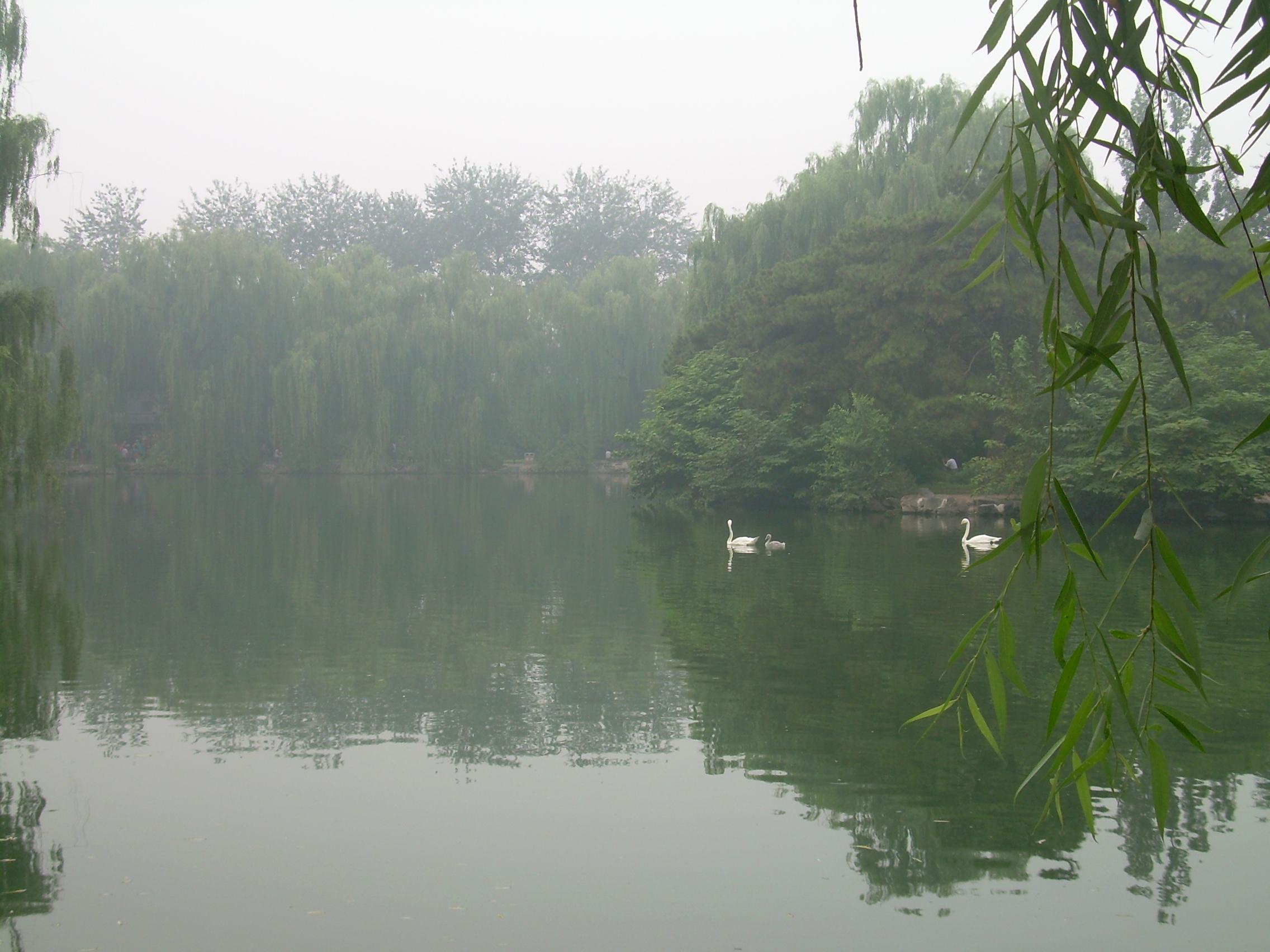 动物园水禽湖