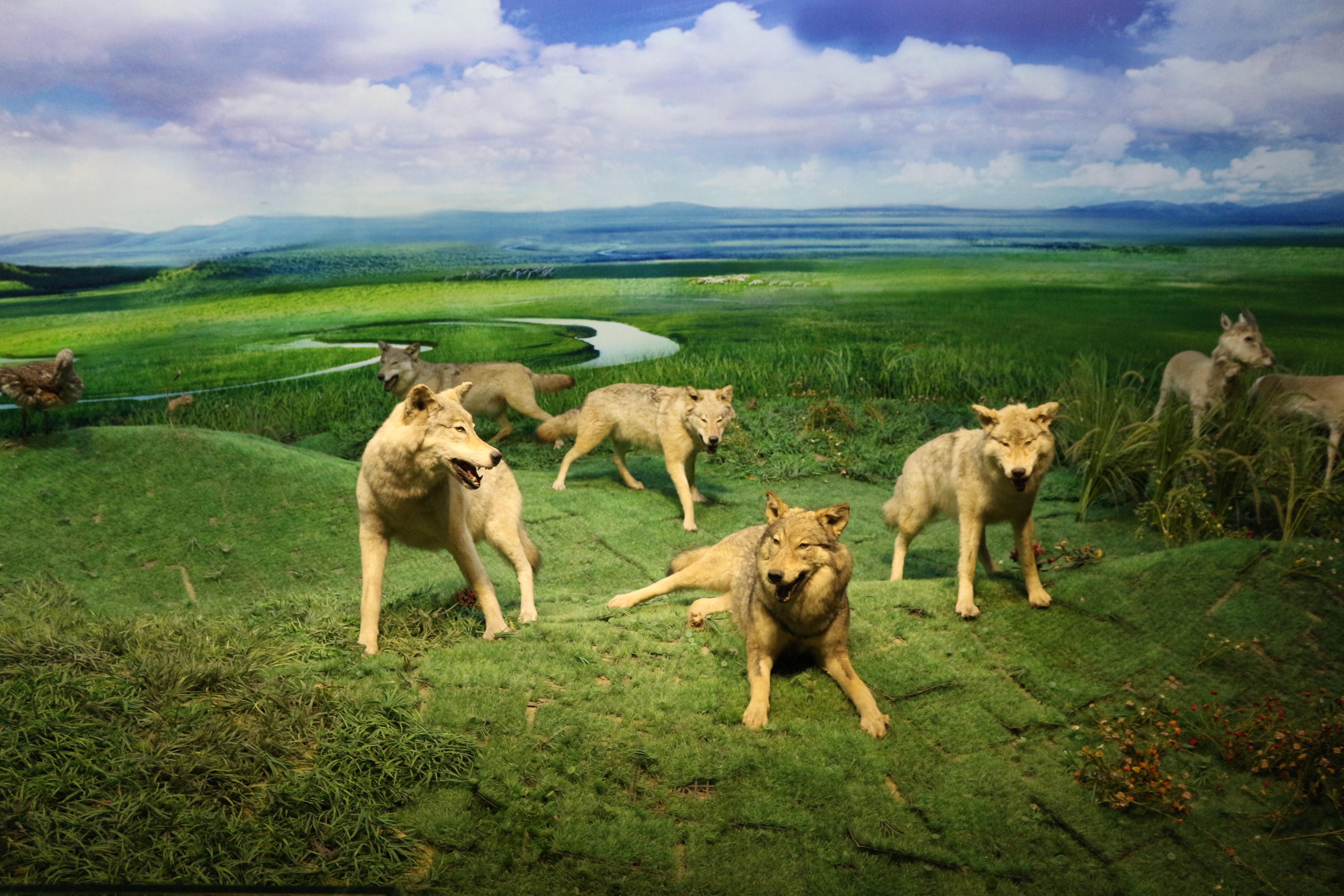 自驾游内蒙古草原