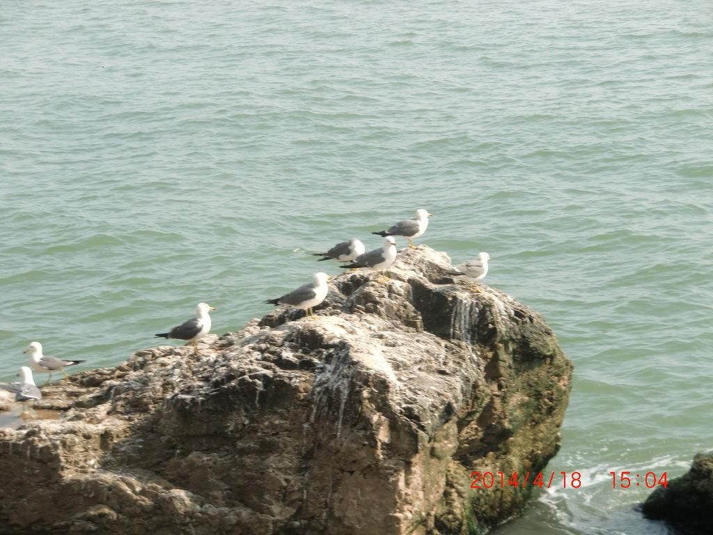 威海西霞口神雕山野生动物园+海驴岛