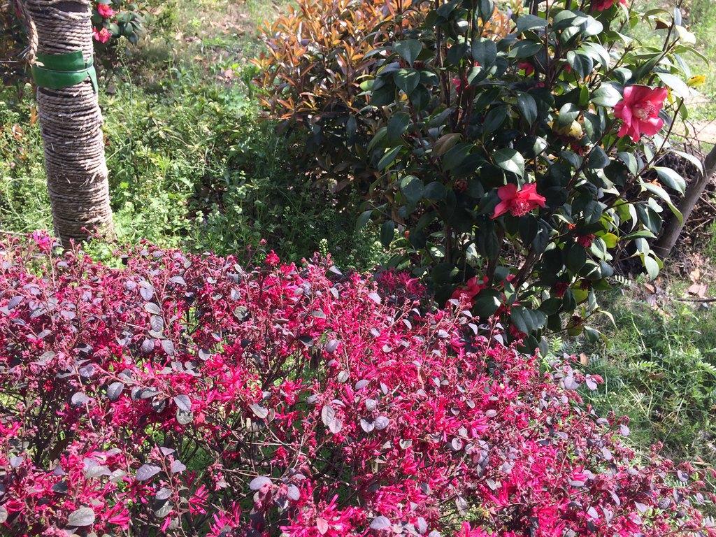 桃花盛开的地方葫芦丝曲谱