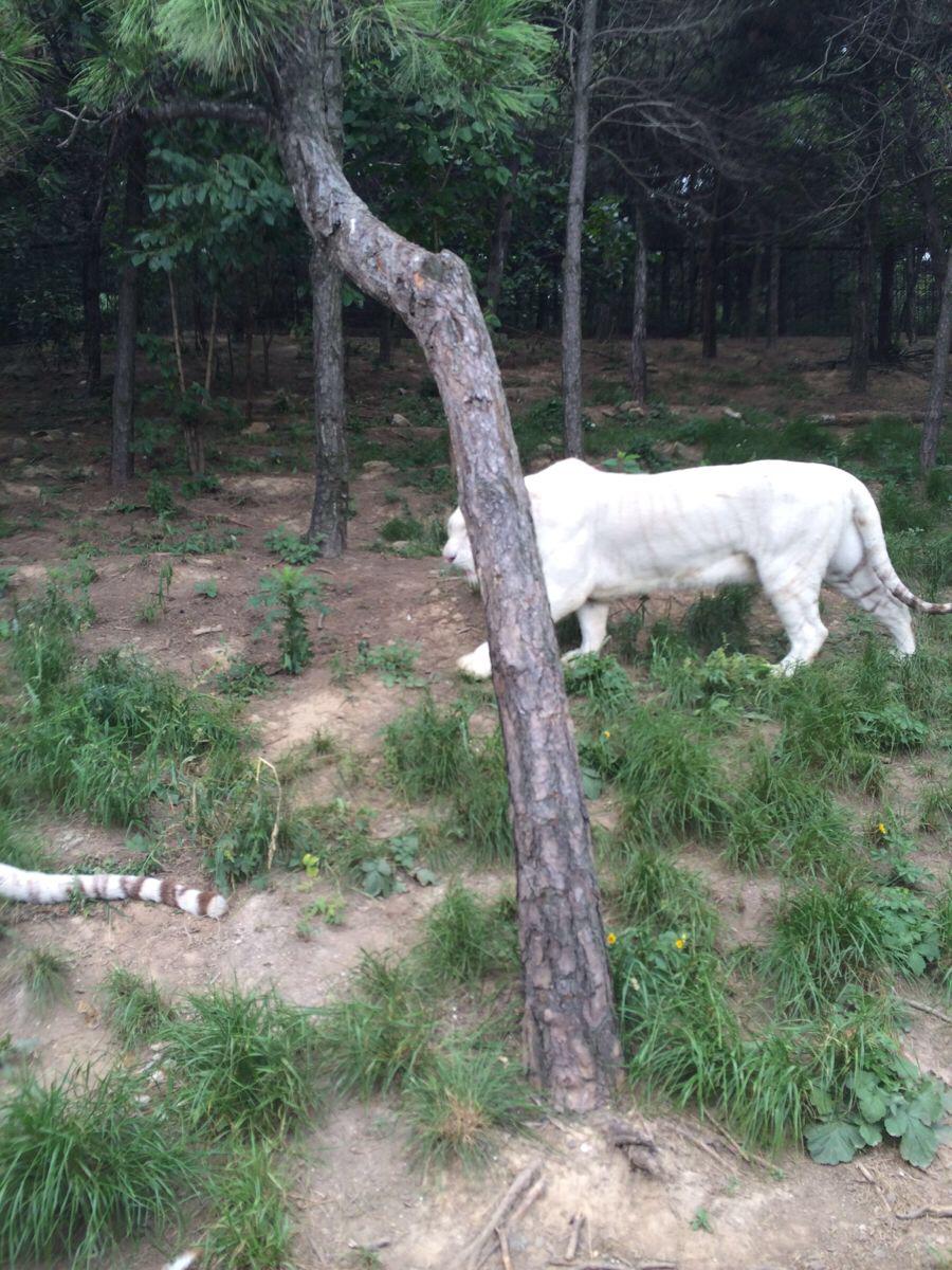 济南跑马岭野生动物园游览攻略