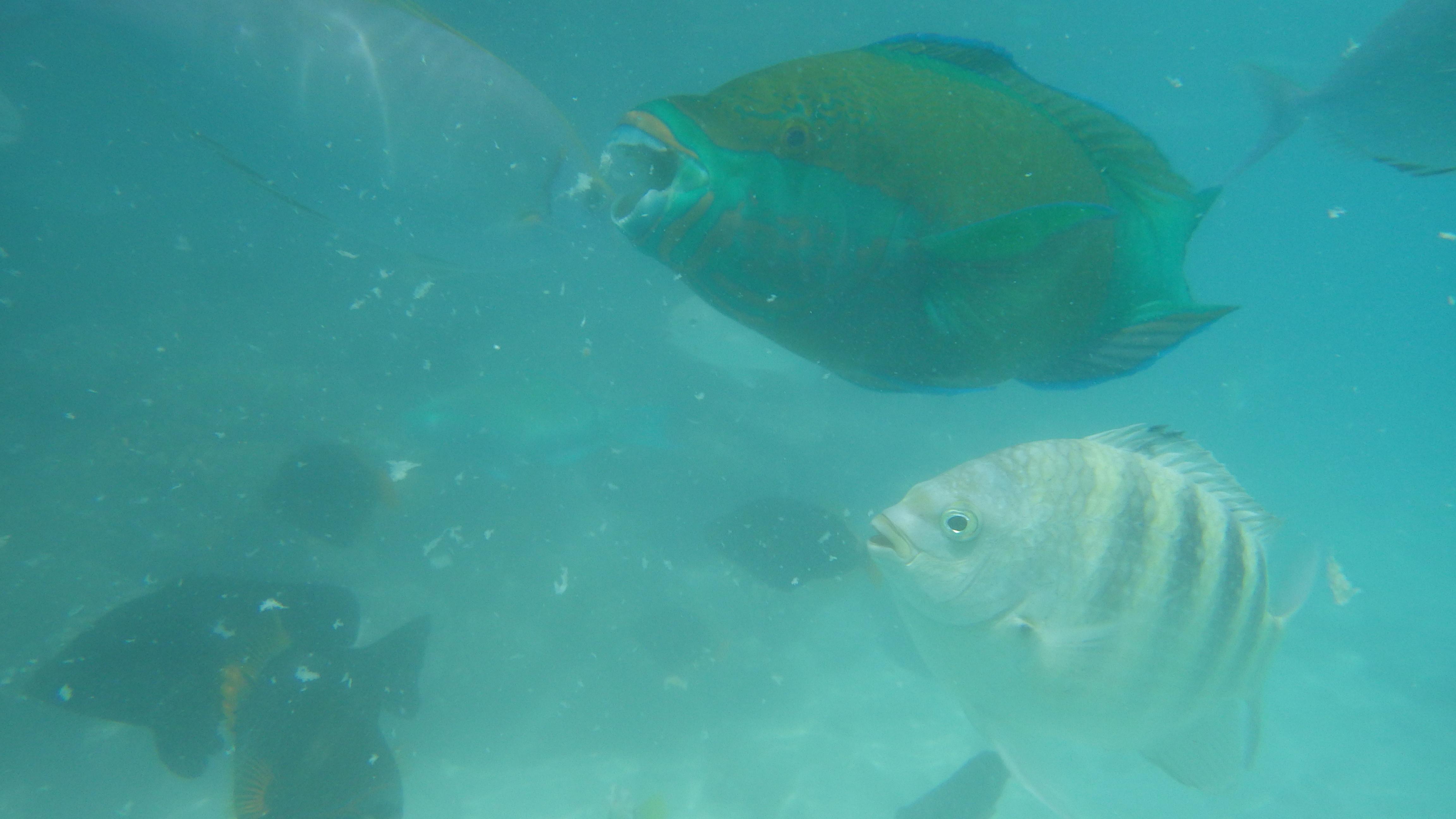 海里有哪些动物