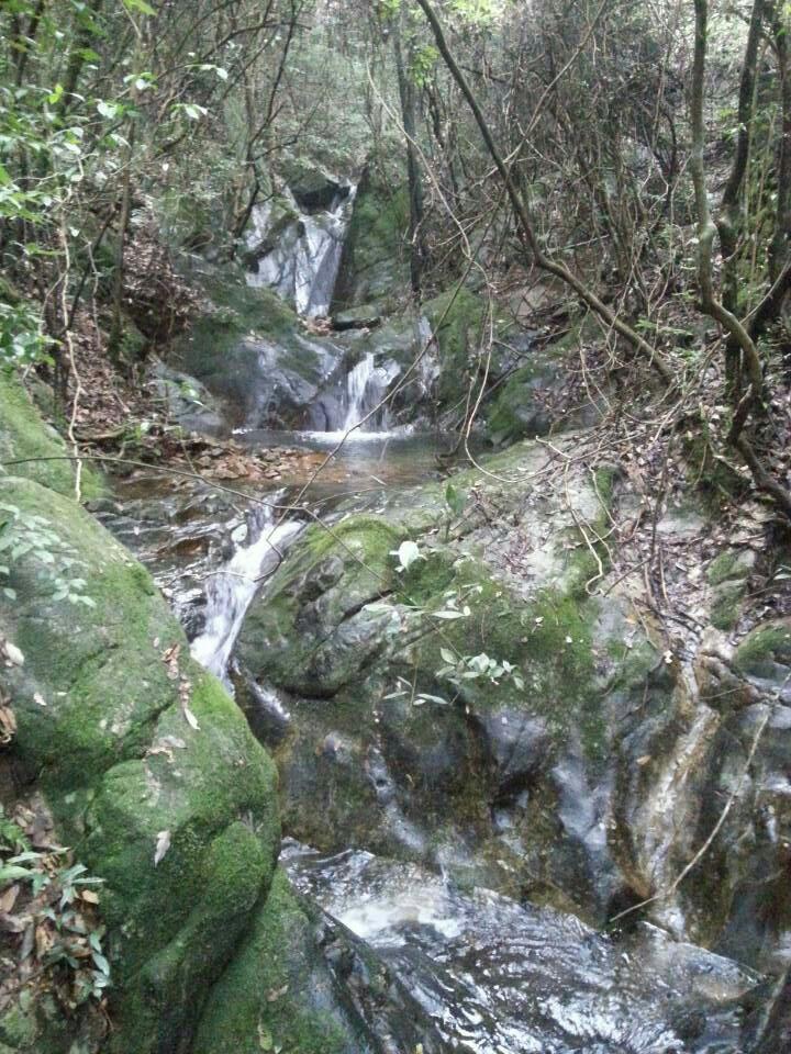千岛湖森林氧吧图片