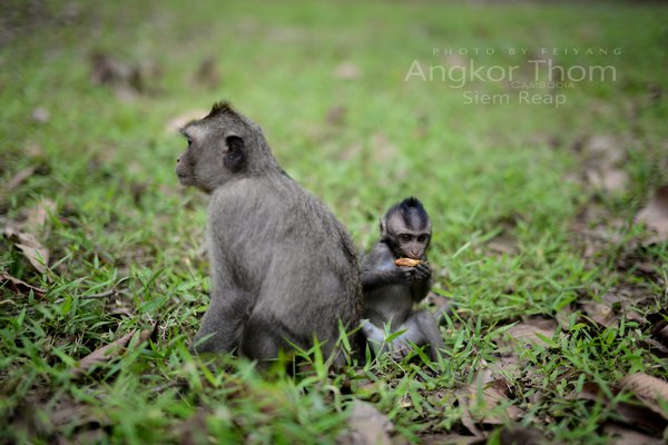 下面一组图描绘一个母爱的故事:猴子妈妈带小猴去