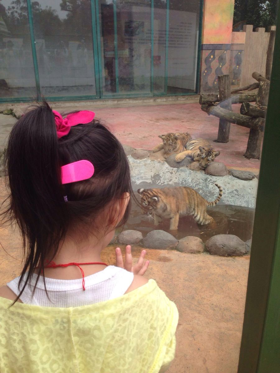 杭州野生动物世界,杭州杭州野生动物世界攻略/地址