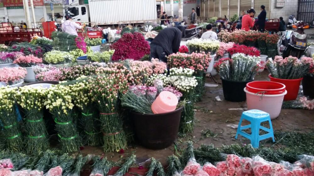 亚洲最大的鲜切花交易市场 斗南花市游玩攻略大全    云南被誉为动植物王国,四季如春,气候宜人,这里供应了全国70~80%的鲜花,每一个到云南旅游的人,都希望到斗南花市体验一番北纬25度地区种植的,来自中国花都的芬芳,这里花潮如海,香气四溢。很多旅人,最头痛的问题就是:从昆明市中心怎么坐地铁到呈贡斗南花市?昆明市区,从东风广场站,坐地铁2号线  地铁1号线,斗南站,