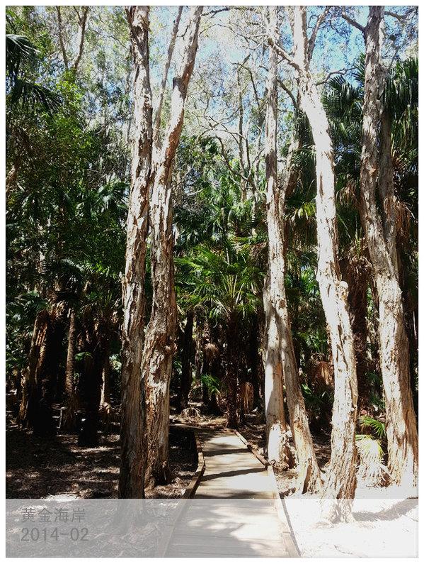 桉树的枝杆都是光滑没有树皮的
