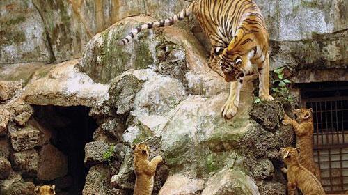 海南热带野生动植物园