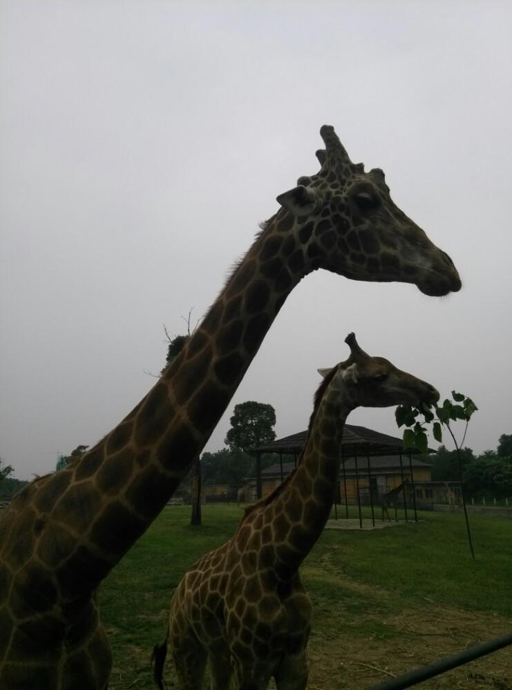 淹城野生动物园,常州淹城野生动物园攻略/地址/图片