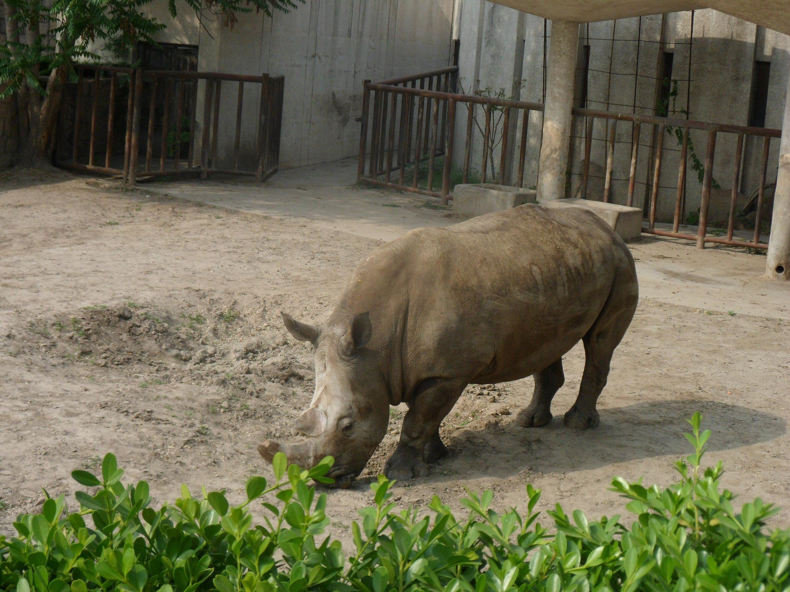 北京动物园,欢乐一天游!