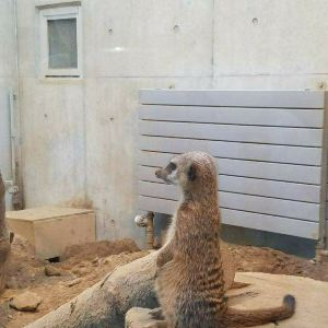 札幌市圆山动物园旅游景点攻略图