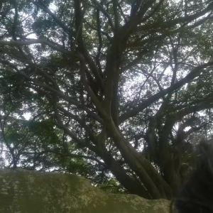 清水岩旅游景点攻略图