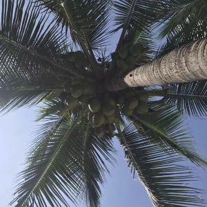 柯噶岛旅游景点攻略图