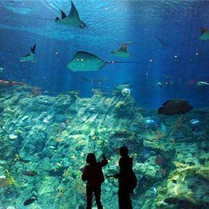 黄金海岸海洋世界旅游景点攻略图