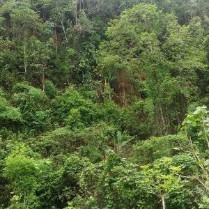 独树成林旅游景点攻略图