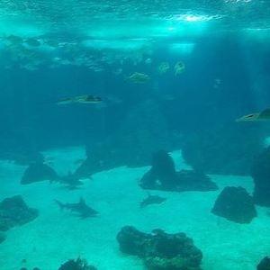 里斯本海洋馆旅游景点攻略图