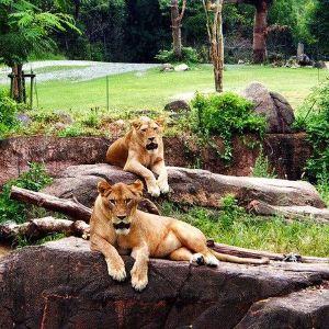 上野动物园旅游景点攻略图