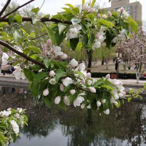 海棠花溪旅游景点攻略图