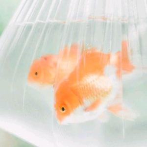 图味美小黄鱼·爱厨房(第一季浙江路店)旅游景点攻略图