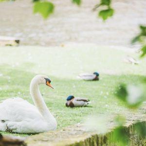 爱之湖旅游景点攻略图
