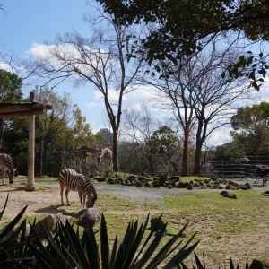 天王寺动物园旅游景点攻略图